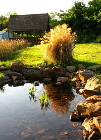 BUUF grounds in summer, Jane Rohling photo